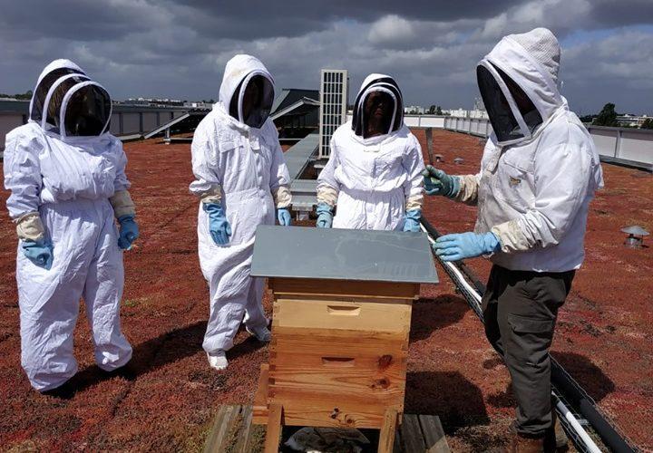 Visite : découverte de la vie des ruches !
